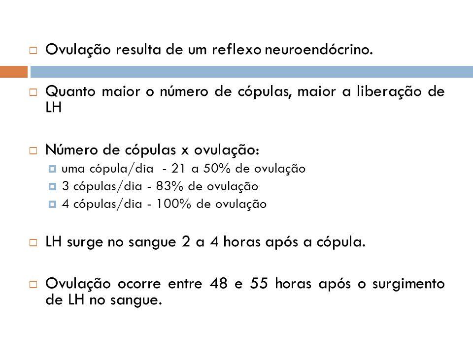 Ovulação resulta de um reflexo neuroendócrino.