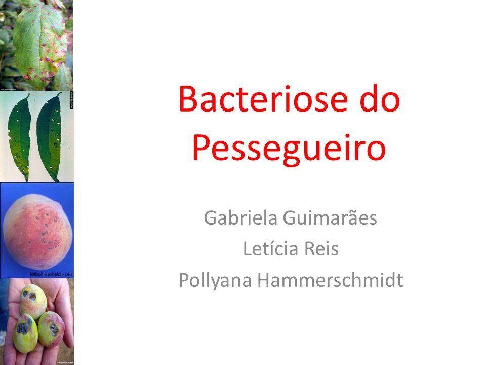 Bacteriose do Pessegueiro
