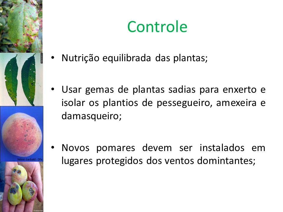 Controle Nutrição equilibrada das plantas;