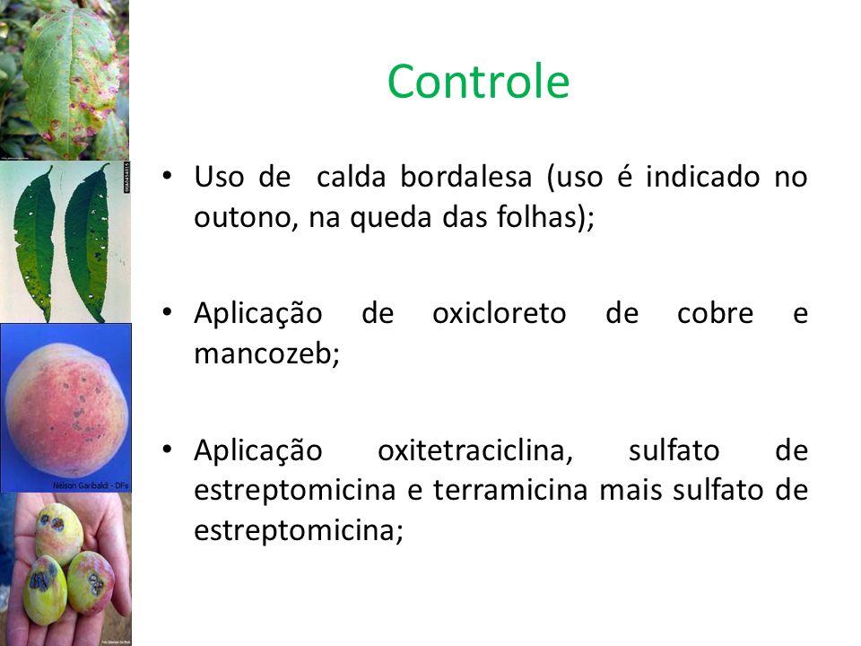 Controle Uso de calda bordalesa (uso é indicado no outono, na queda das folhas); Aplicação de oxicloreto de cobre e mancozeb;