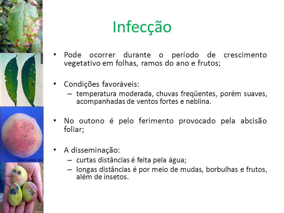 InfecçãoPode ocorrer durante o período de crescimento vegetativo em folhas, ramos do ano e frutos; Condições favoráveis: