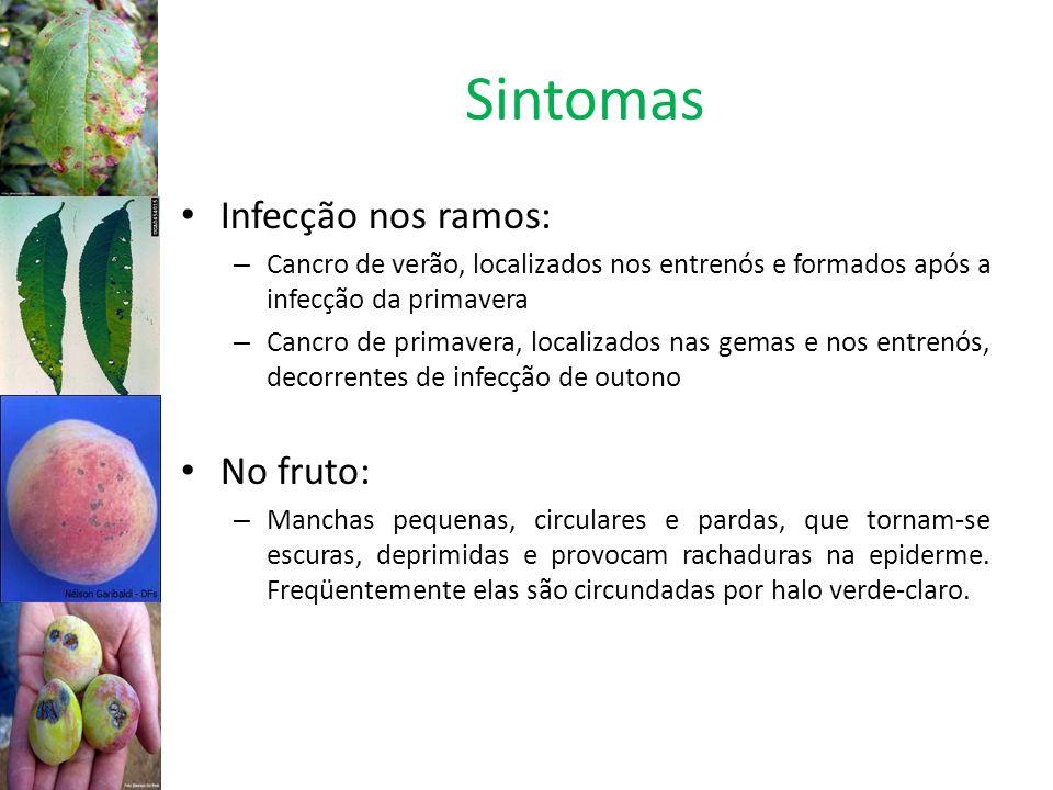 Sintomas Infecção nos ramos: No fruto: