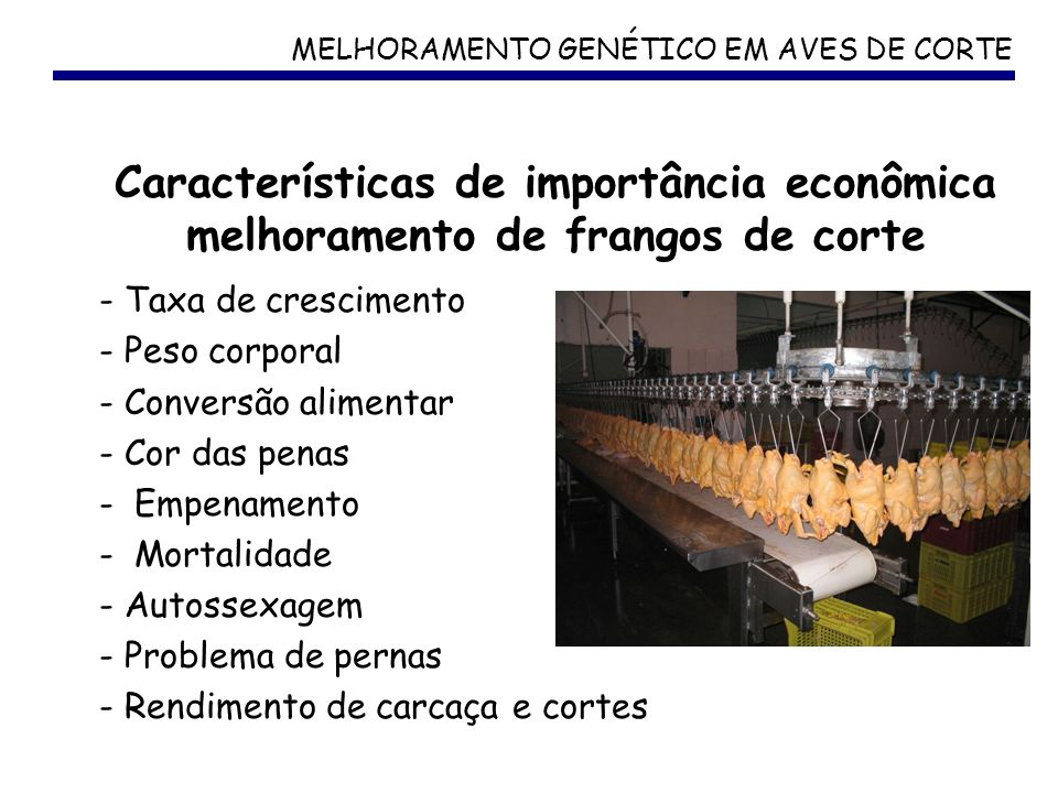 MELHORAMENTO GENÉTICO EM AVES DE CORTE