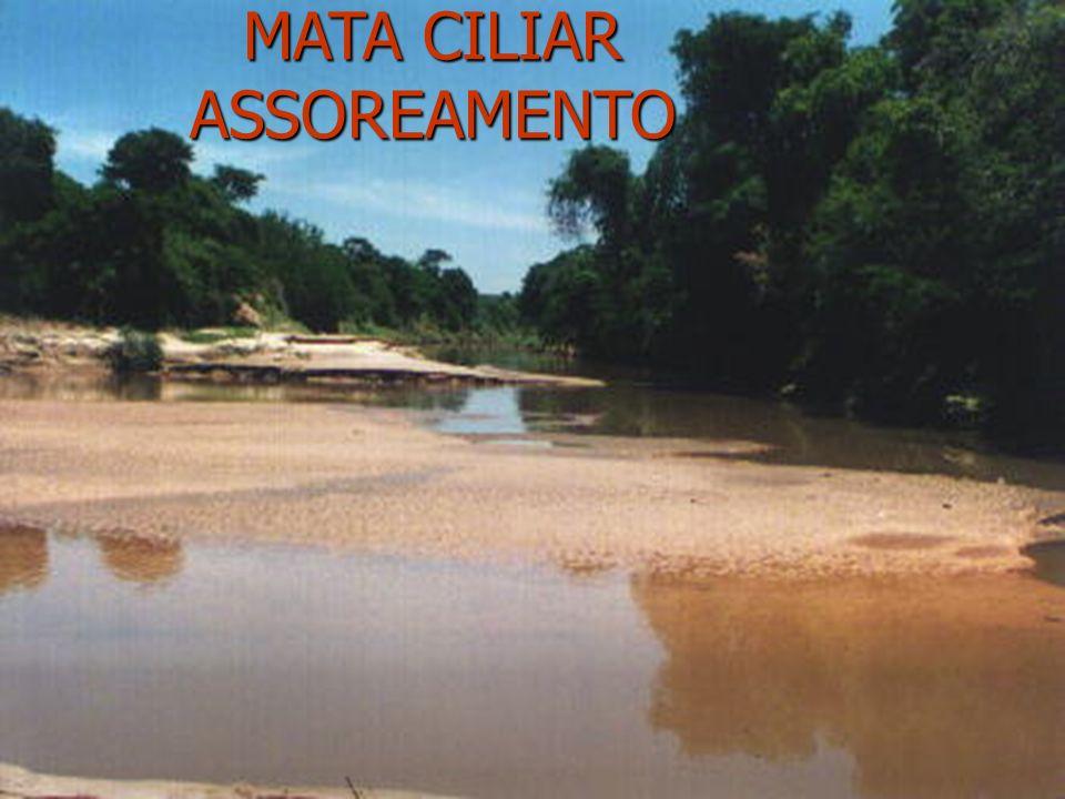 MATA CILIAR ASSOREAMENTO