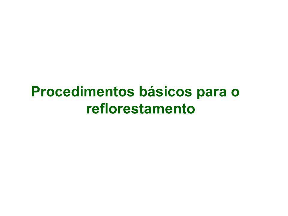 Procedimentos básicos para o reflorestamento