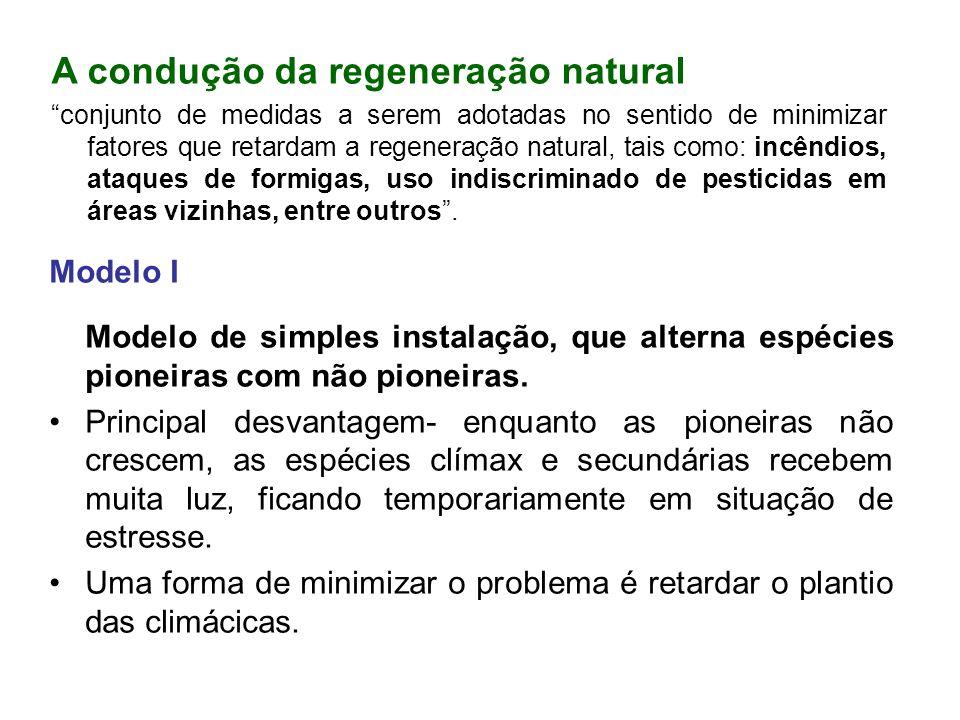 A condução da regeneração natural