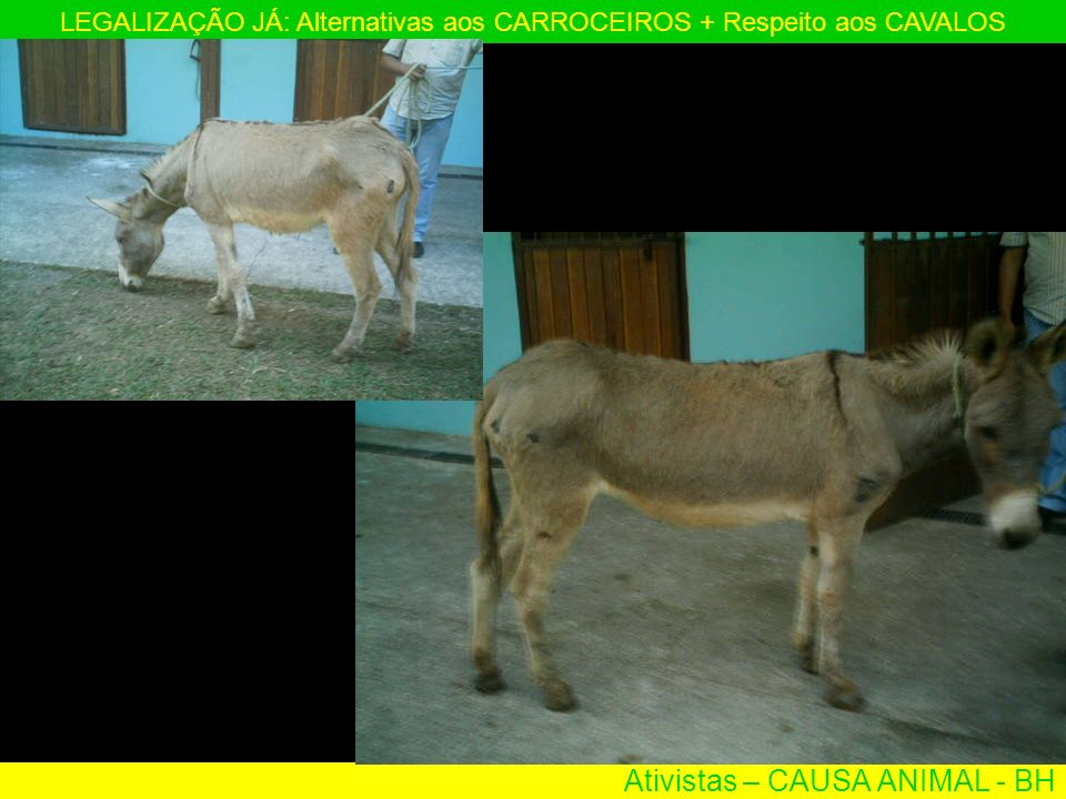 Ativistas – CAUSA ANIMAL - BH