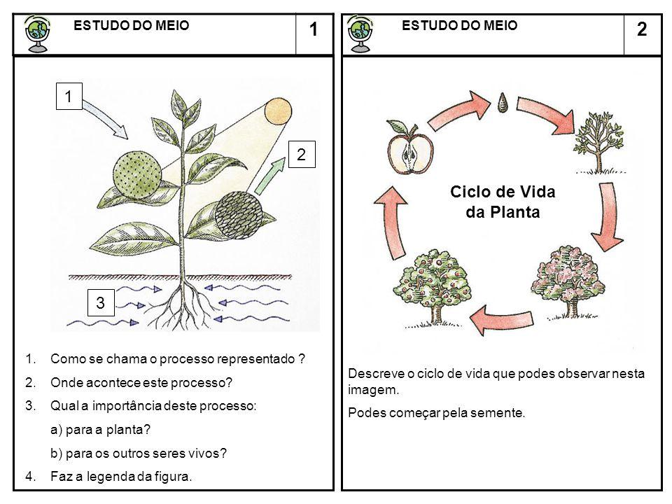 1 2 1 2 Ciclo de Vida da Planta 3 ESTUDO DO MEIO ESTUDO DO MEIO