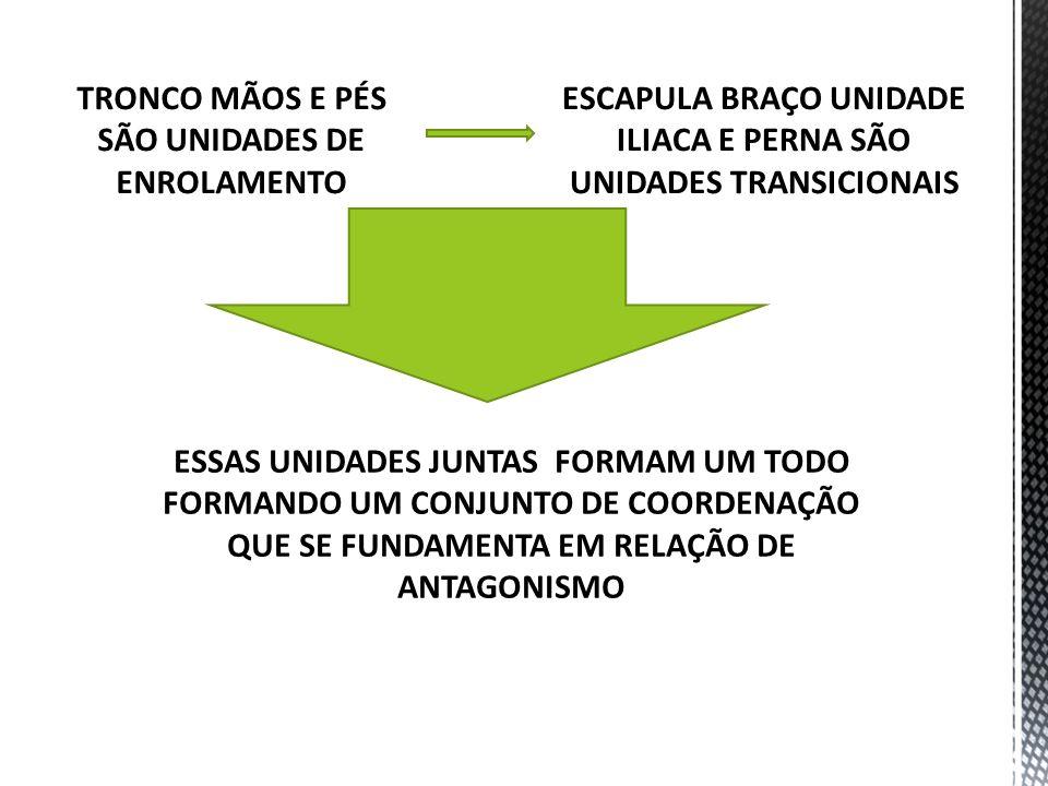 TRONCO MÃOS E PÉS SÃO UNIDADES DE ENROLAMENTO