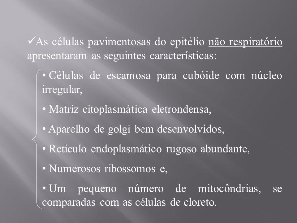 As células pavimentosas do epitélio não respiratório apresentaram as seguintes características:
