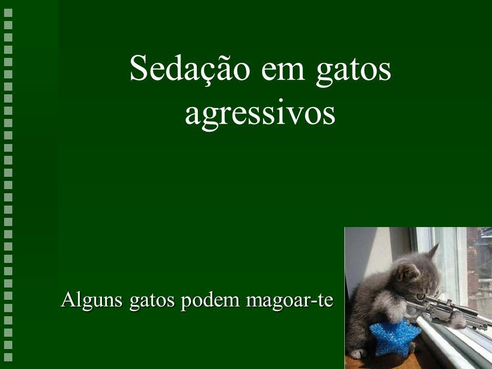 Sedação em gatos agressivos