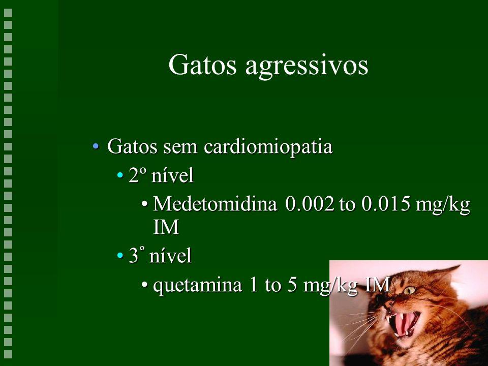 Gatos agressivos Gatos sem cardiomiopatia 2º nível