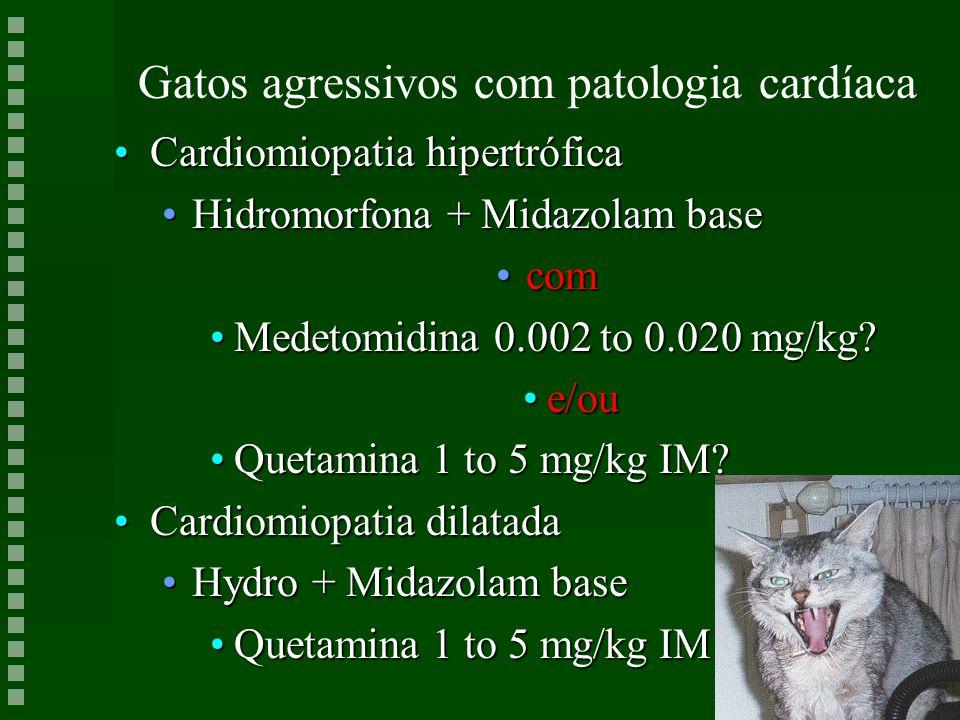 Gatos agressivos com patologia cardíaca