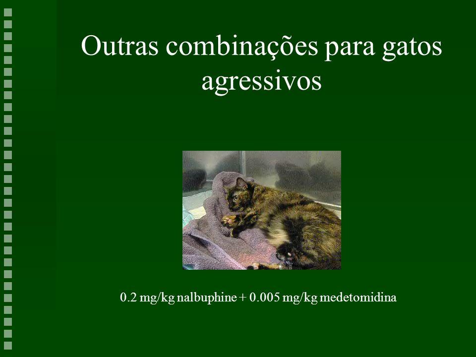 Outras combinações para gatos agressivos