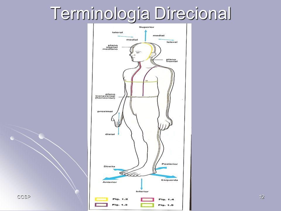 Terminologia Direcional