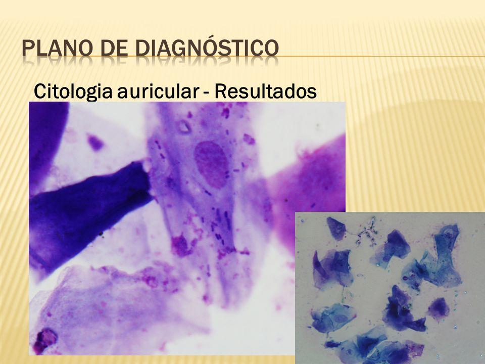 PLANO DE Diagnóstico Citologia auricular - Resultados