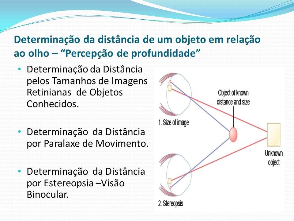 Determinação da distância de um objeto em relação ao olho – Percepção de profundidade