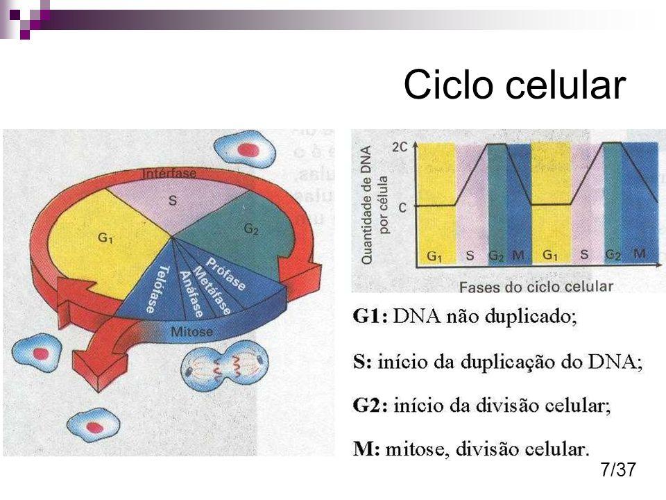 Ciclo celular 7/37