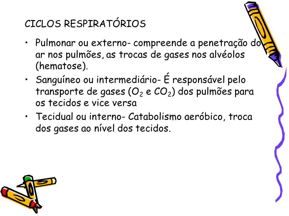 CICLOS RESPIRATÓRIOSPulmonar ou externo- compreende a penetração do ar nos pulmões, as trocas de gases nos alvéolos (hematose).