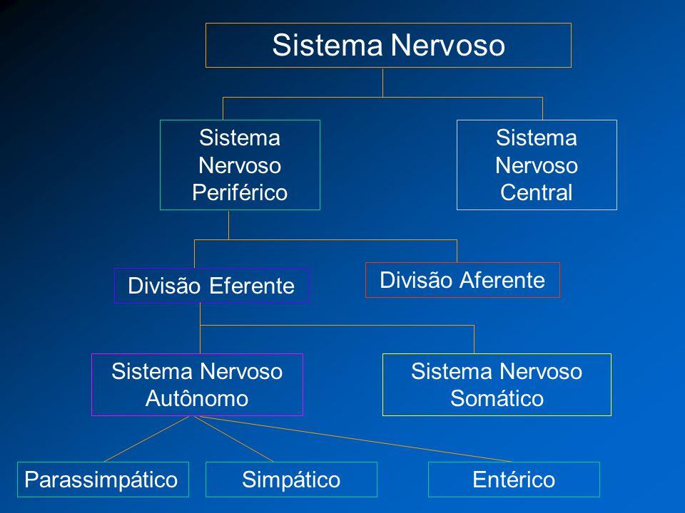 Sistema Nervoso Sistema Nervoso Periférico Sistema Nervoso Central