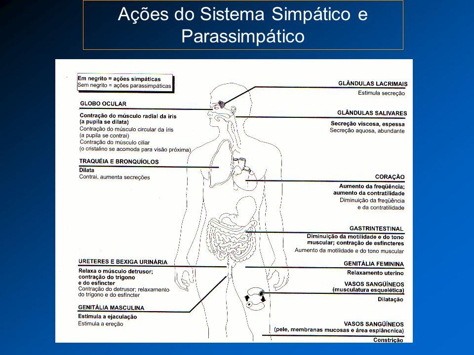 Ações do Sistema Simpático e Parassimpático