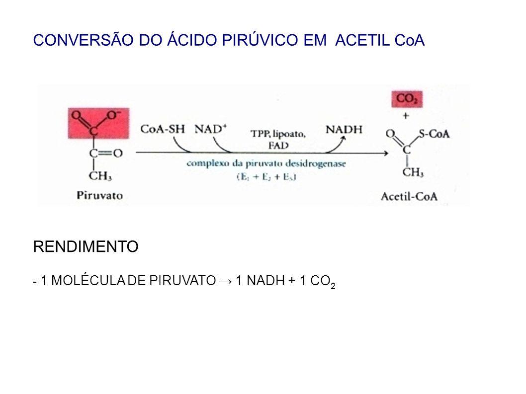 CONVERSÃO DO ÁCIDO PIRÚVICO EM ACETIL CoA