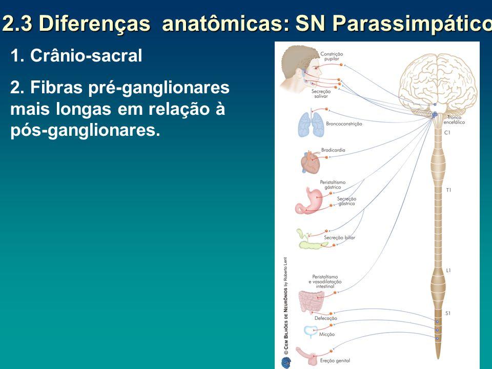 2.3 Diferenças anatômicas: SN Parassimpático