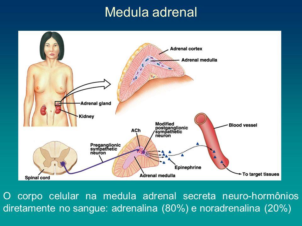 Medula adrenal24/03/2017.