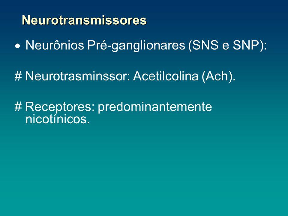 Neurônios Pré-ganglionares (SNS e SNP):