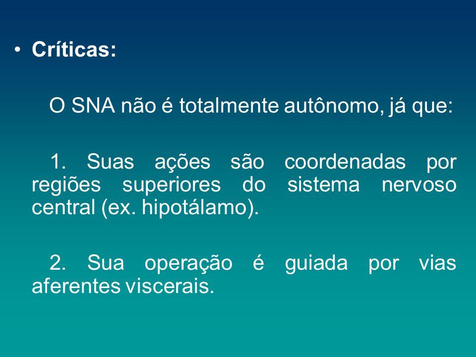 Críticas: O SNA não é totalmente autônomo, já que: 1. Suas ações são coordenadas por regiões superiores do sistema nervoso central (ex. hipotálamo).