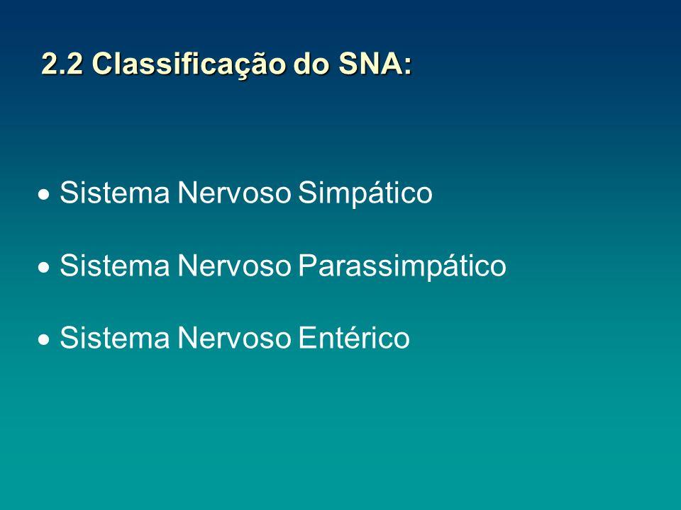 Sistema Nervoso Simpático Sistema Nervoso Parassimpático