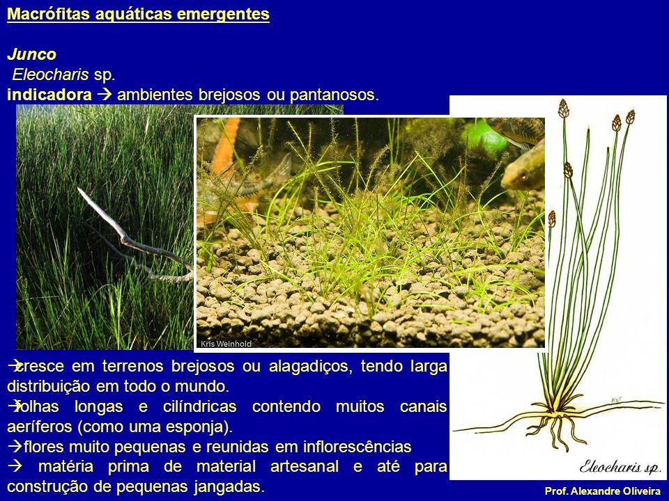 Macrófitas aquáticas emergentes