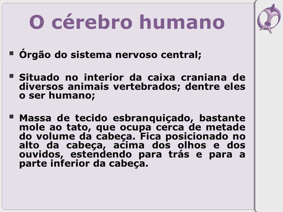 O cérebro humano Órgão do sistema nervoso central;