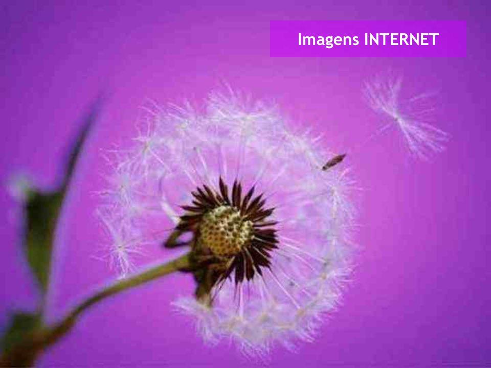 Imagens INTERNET