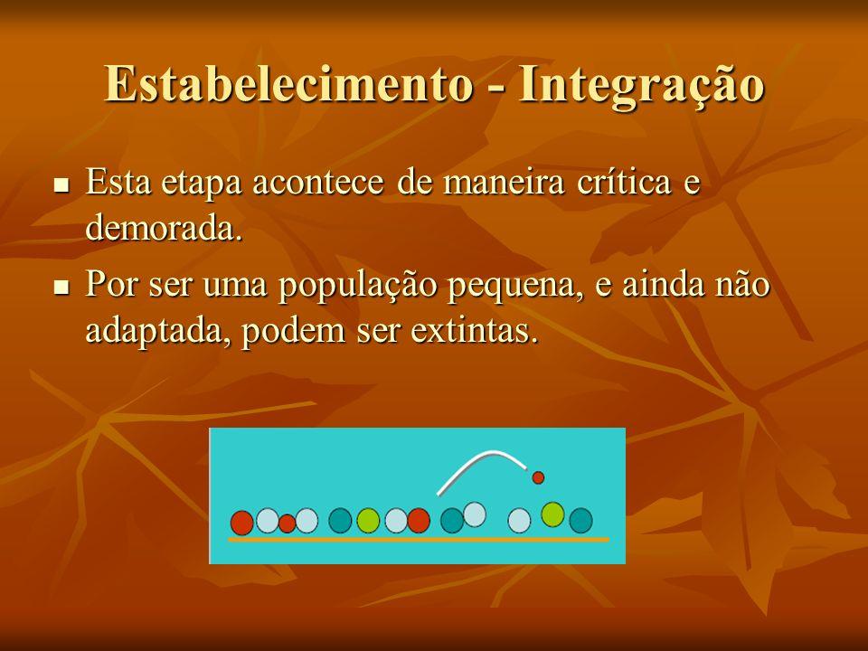 Estabelecimento - Integração