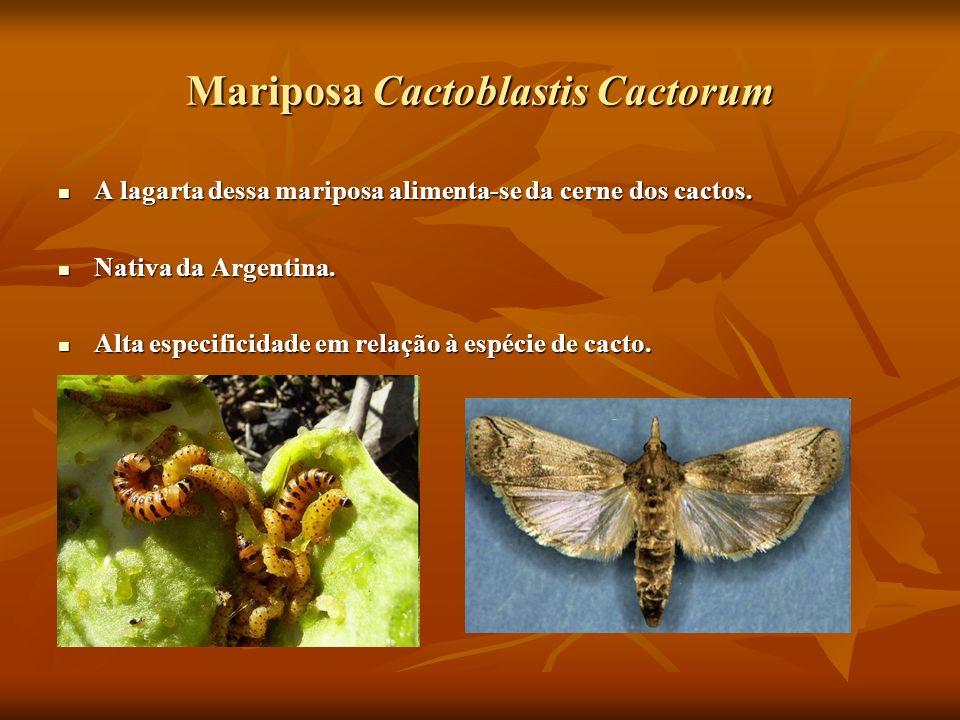 Mariposa Cactoblastis Cactorum