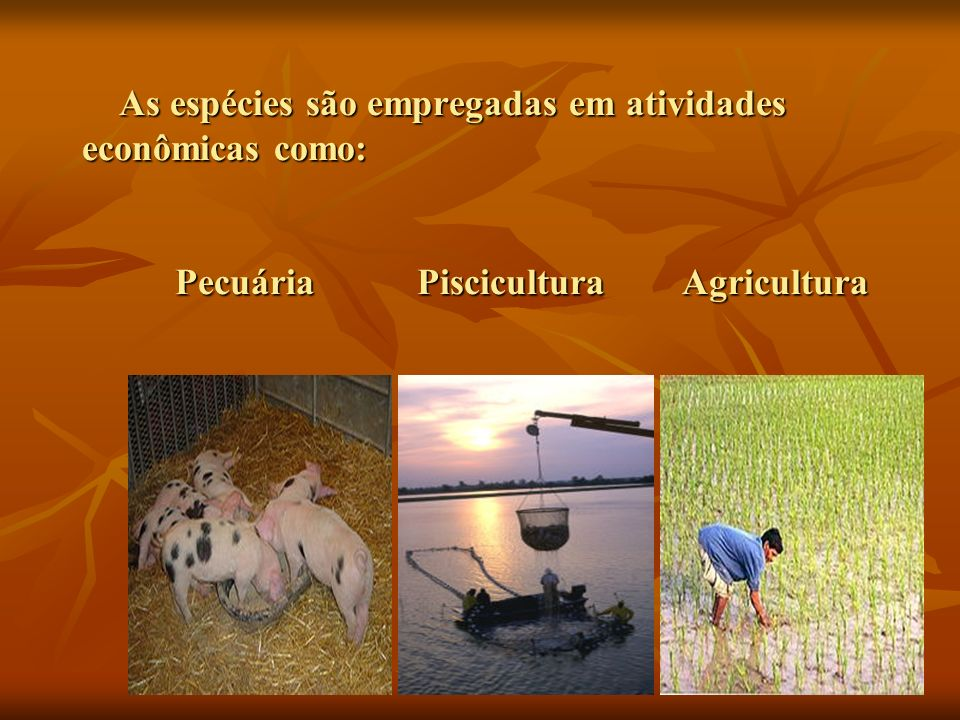 As espécies são empregadas em atividades econômicas como: Pecuária