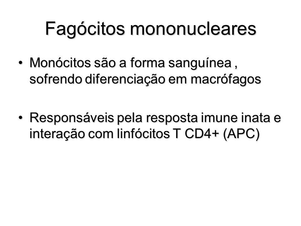Fagócitos mononucleares