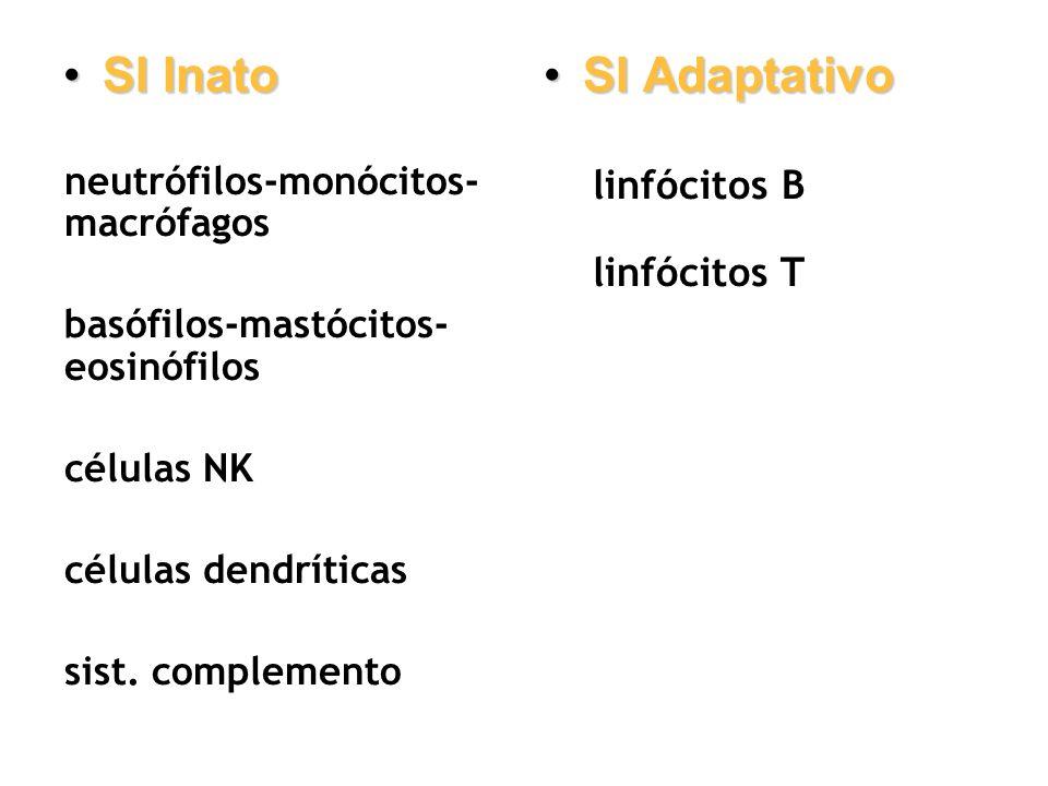 SI Inato SI Adaptativo linfócitos B linfócitos T