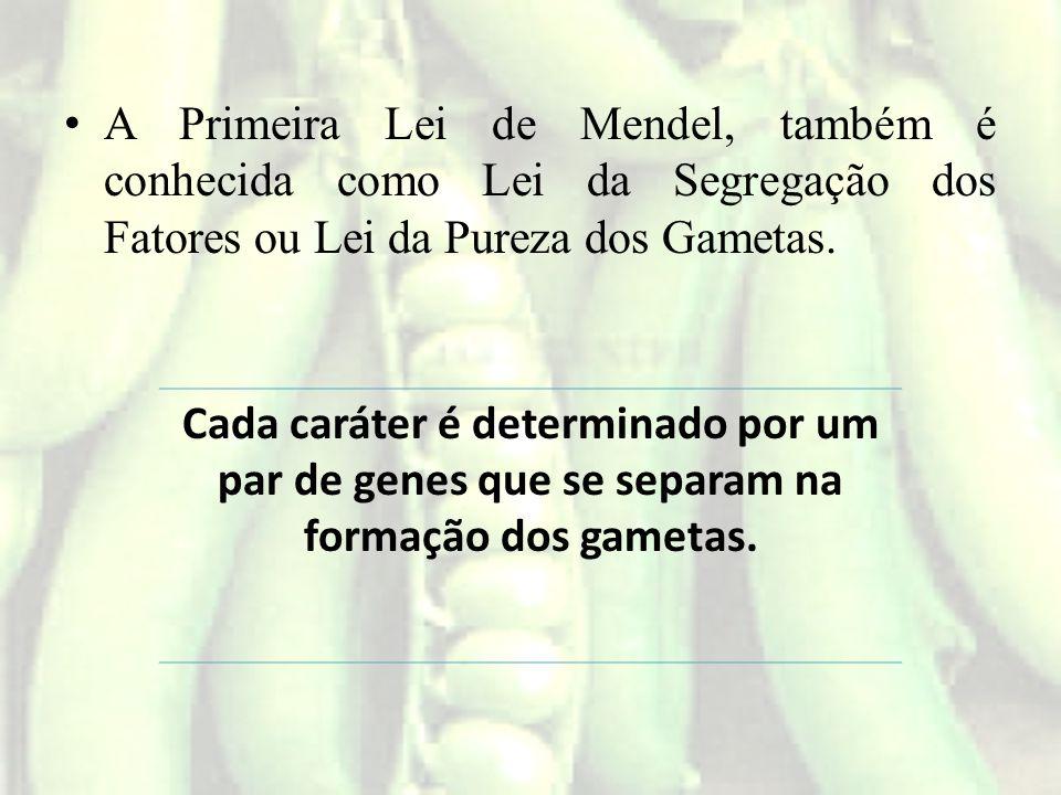 A Primeira Lei de Mendel, também é conhecida como Lei da Segregação dos Fatores ou Lei da Pureza dos Gametas.