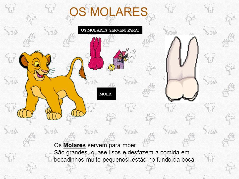 OS MOLARES SERVEM PARA: