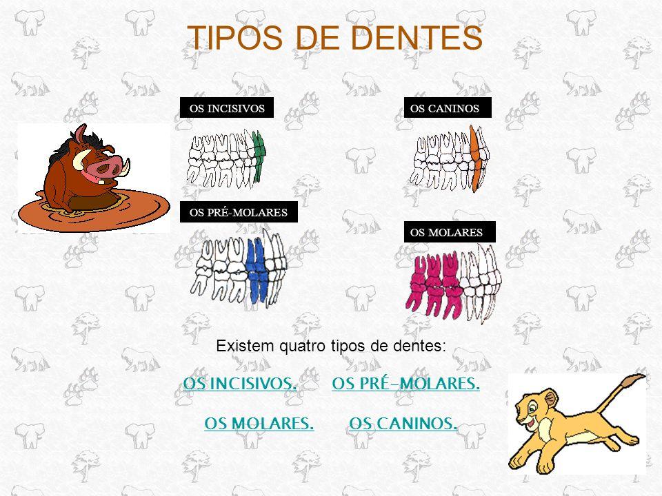 TIPOS DE DENTES Existem quatro tipos de dentes: