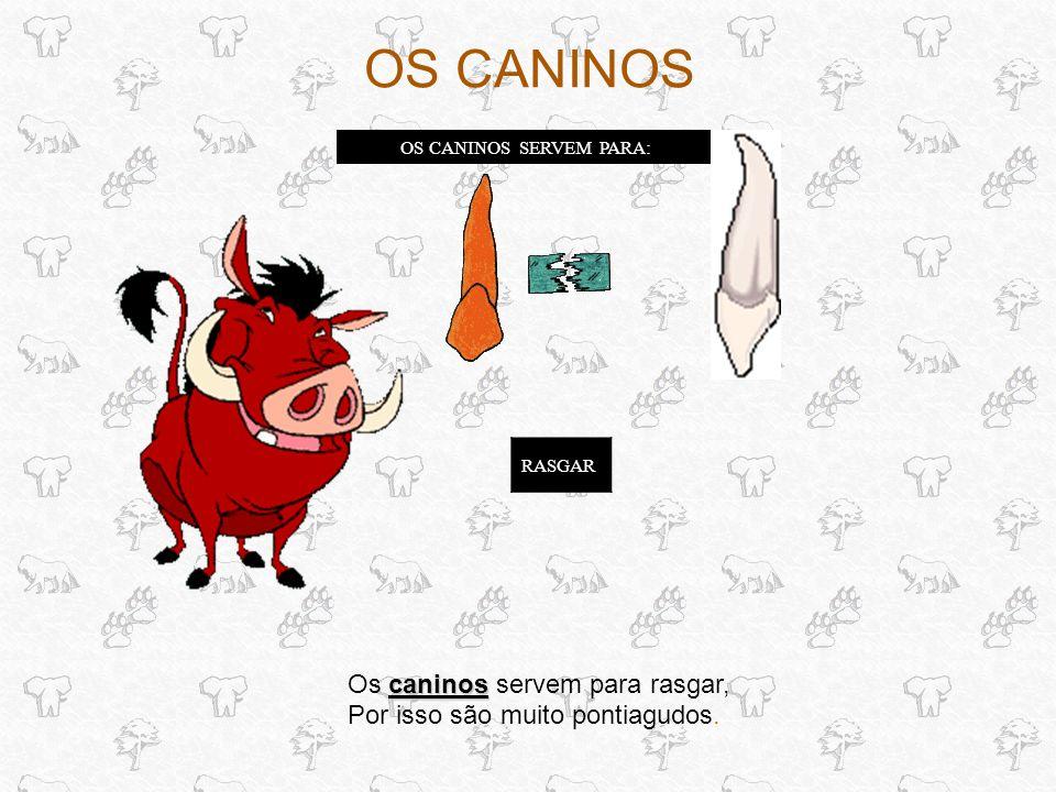 OS CANINOS SERVEM PARA: