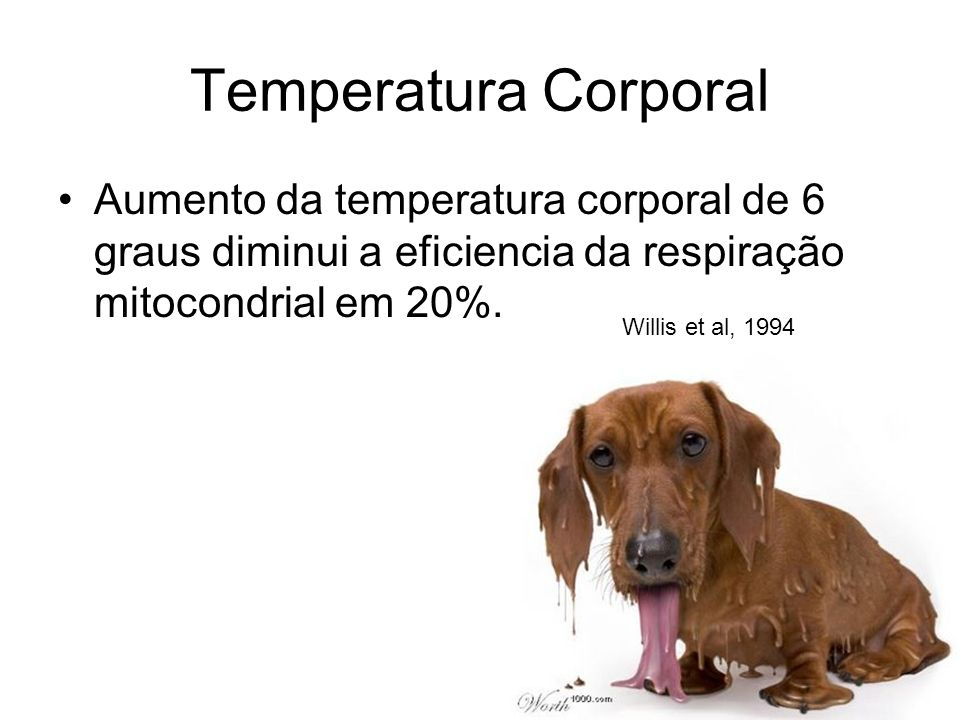 Temperatura Corporal Aumento da temperatura corporal de 6 graus diminui a eficiencia da respiração mitocondrial em 20%.
