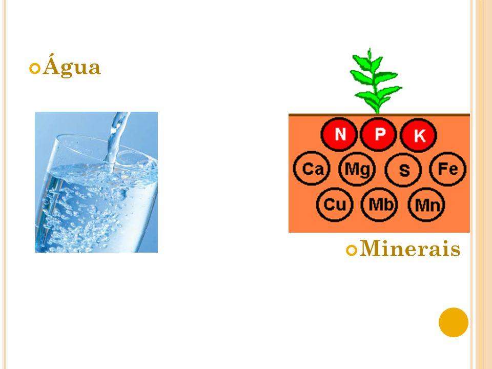 Água Minerais