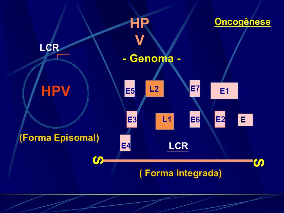 HPV HPV S S  - Genoma - Oncogênese LCR (Forma Episomal) LCR