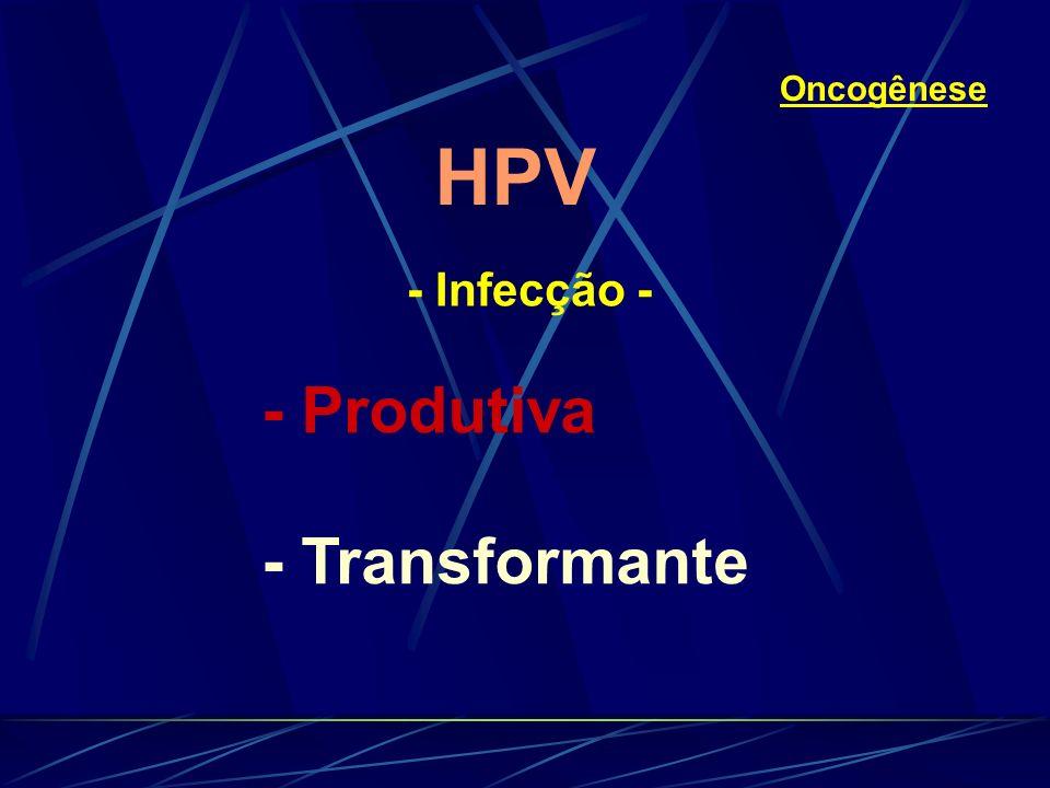 Oncogênese HPV - Infecção - - Produtiva - Transformante