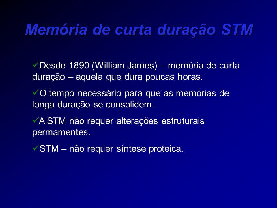 Memória de curta duração STM
