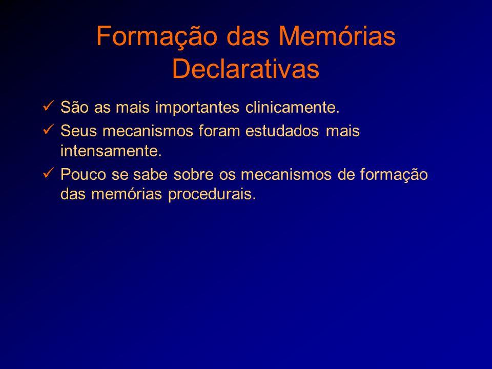 Formação das Memórias Declarativas