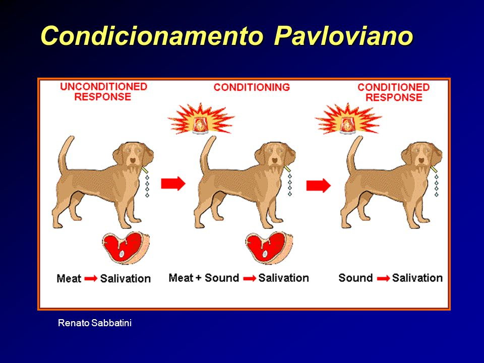 Condicionamento Pavloviano